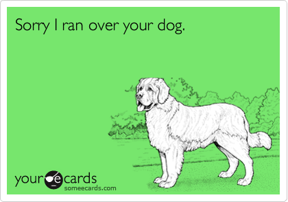 Sorry I ran over your dog.