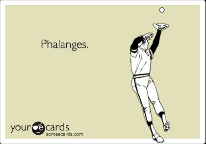 Phalanges.