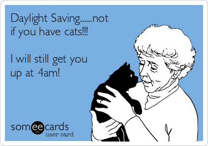 Daylight Saving......not if you have cats!!!  I will still get you up at 4am!
