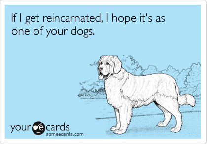 If I get reincarnated, I hope it's as one of your dogs.