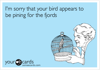 I'm sorry that your bird appears to be pining for the fjords