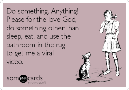 Do something. Anything! Please for the love God, do something other than sleep, eat, and use the bathroom in the rug to get me a viral video.