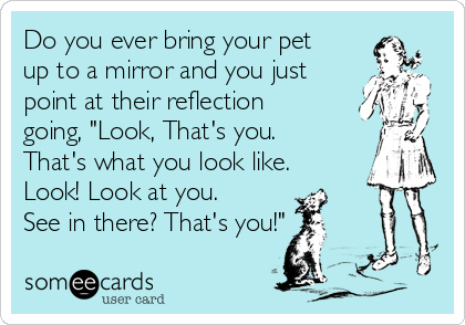 "Do you ever bring your pet up to a mirror and you just point at their reflection going, ""Look, That's you. That's what you look like. Look! Look at you. See in there? That's you!"""