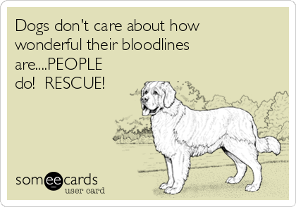 Dogs don't care about how wonderful their bloodlines are....PEOPLE do!  RESCUE!