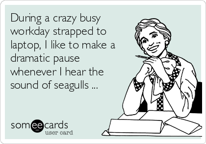 During a crazy busy workday strapped to laptop, I like to make a dramatic pause whenever I hear the sound of seagulls ...