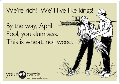 We're rich!  We'll live like kings!By the way, AprilFool, you dumbass.  This is wheat, not weed.