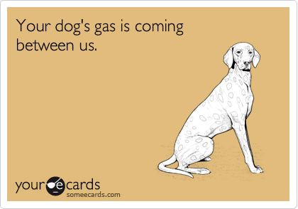 Your dog's gas is coming  between us.