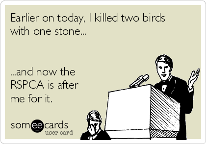 Earlier on today, I killed two birds with one stone...   ...and now the RSPCA is after me for it.
