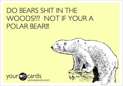 DO BEARS SHIT IN THE WOODS???  NOT IF YOUR A POLAR BEAR!!!
