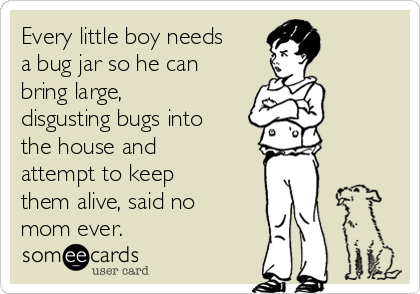 Every little boy needs a bug jar so he can bring large, disgusting bugs into the house and attempt to keep them alive, said no mom ever.