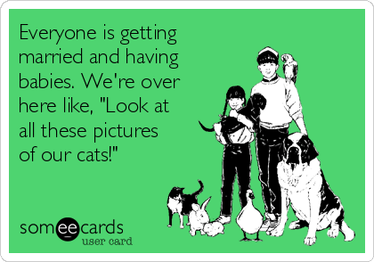 """Everyone is getting married and having babies. We're over here like, """"Look at all these pictures of our cats!"""""""