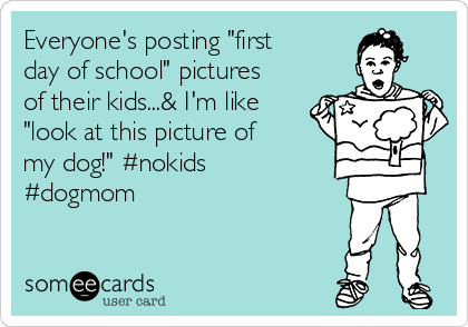 """Everyone's posting """"first day of school"""" pictures of their kids...& I'm like """"look at this picture of my dog!"""" #nokids #dogmom"""