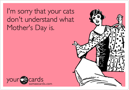 I'm sorry that your cats