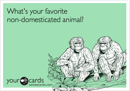 What's your favorite non-domesticated animal?