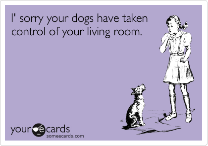I' sorry your dogs have takencontrol of your living room.