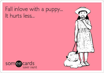Fall inlove with a puppy... It hurts less...