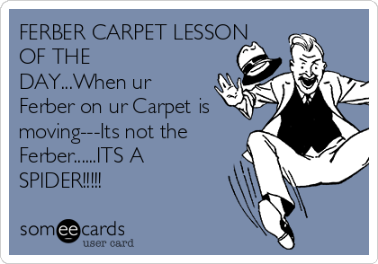 FERBER CARPET LESSON OF THE DAY...When ur Ferber on ur Carpet is moving---Its not the Ferber......ITS A SPIDER!!!!!