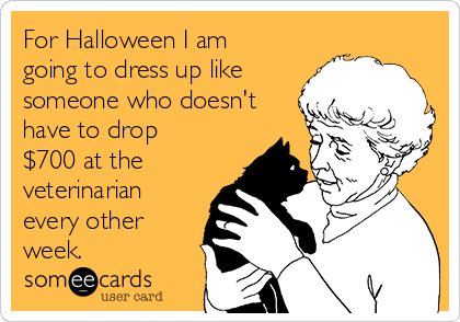 For Halloween I am going to dress up like someone who doesn't have to drop $700 at the veterinarian every other week.