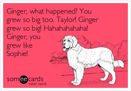 Ginger, what happened? You grew so big too. Taylor! Ginger grew so big! Hahahahahaha! Ginger, you grew like Sophie!