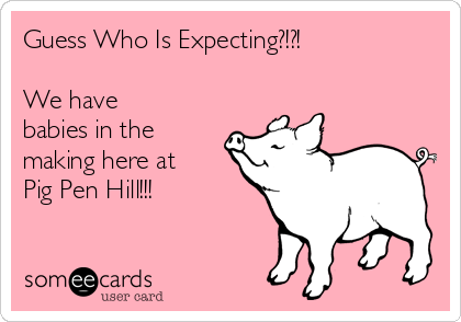 Guess Who Is Expecting?!?!  We have babies in the making here at Pig Pen Hill!!!
