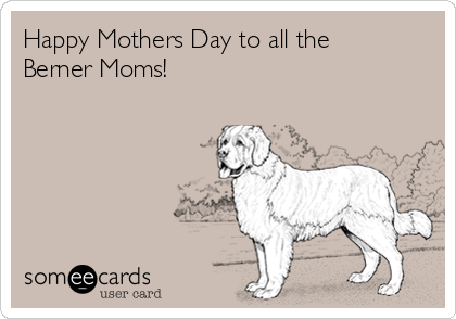 Happy Mothers Day to all the Berner Moms!