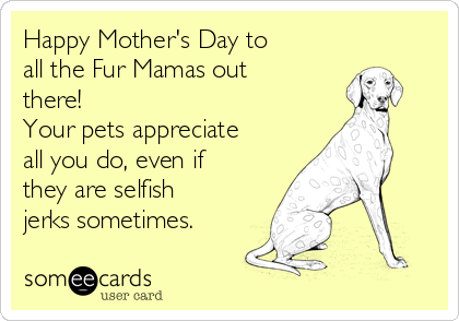 Happy Mother's Day to  all the Fur Mamas out there!   Your pets appreciate all you do, even if they are selfish jerks sometimes.