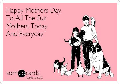 Happy Mothers Day To All The Fur  Mothers Today  And Everyday