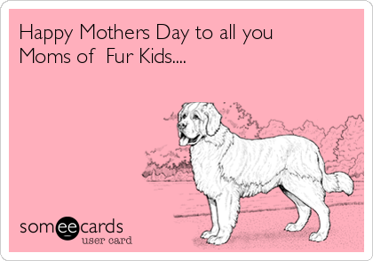 Happy Mothers Day to all you Moms of  Fur Kids....