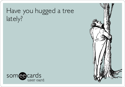 Have you hugged a tree lately?