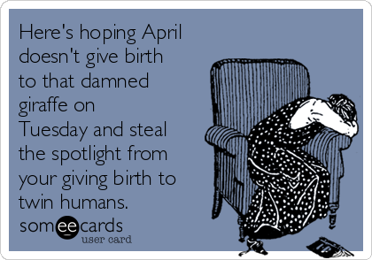 Here's hoping April doesn't give birth to that damned giraffe on Tuesday and steal the spotlight from your giving birth to twin humans.