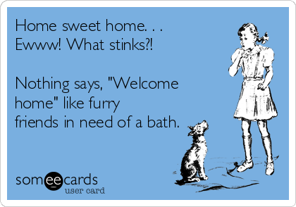 "Home sweet home. . .  Ewww! What stinks?!   Nothing says, ""Welcome home"" like furry friends in need of a bath."