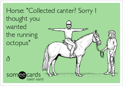 "Horse: ""Collected canter? Sorry I thought you wanted the running octopus"""