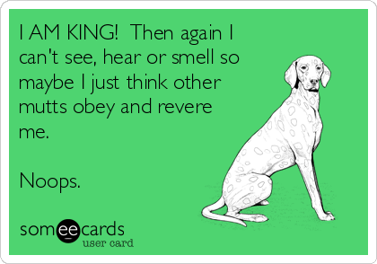 I AM KING!  Then again I can't see, hear or smell so  maybe I just think other mutts obey and revere me.   Noops.