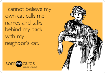 I cannot believe my own cat calls me names and talks behind my back with my neighbor's cat.