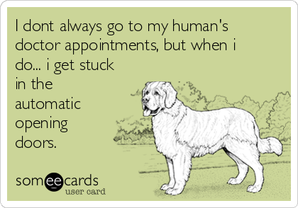 I dont always go to my human's doctor appointments, but when i do... i get stuck in the automatic opening doors.