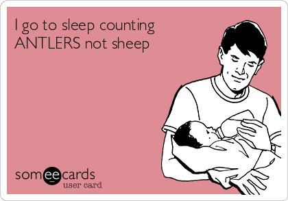 I go to sleep counting ANTLERS not sheep