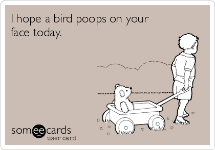 I hope a bird poops on your face today.