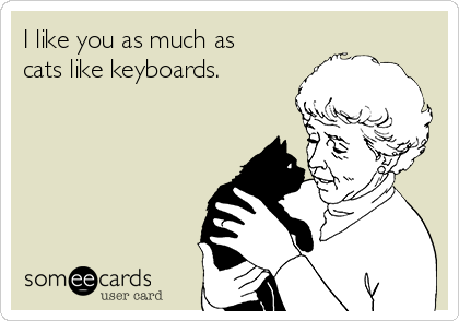I like you as much as cats like keyboards.