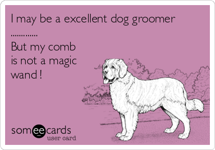 I may be a excellent dog groomer ............. But my comb is not a magic wand !