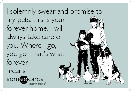 I solemnly swear and promise to my pets: this is your forever home. I will always take care of you. Where I go, you go. That's what forever means.