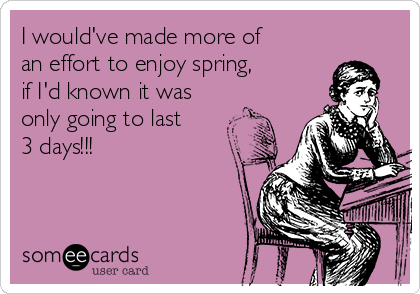I would've made more of an effort to enjoy spring,  if I'd known it was  only going to last 3 days!!!