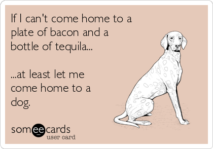 If I can't come home to a plate of bacon and a bottle of tequila...  ...at least let me come home to a dog.