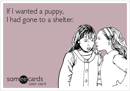 If I wanted a puppy,  I had gone to a shelter.