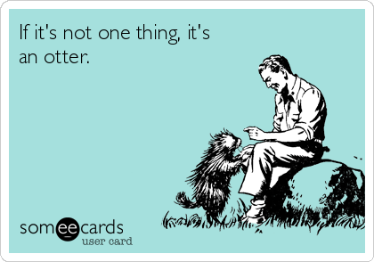 If it's not one thing, it's an otter.