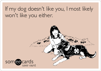 If my dog doesn't like you, I most likely won't like you either.