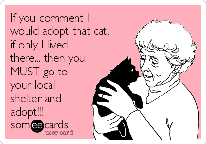 If you comment I would adopt that cat, if only I lived there... then you MUST go to your local shelter and adopt!!!