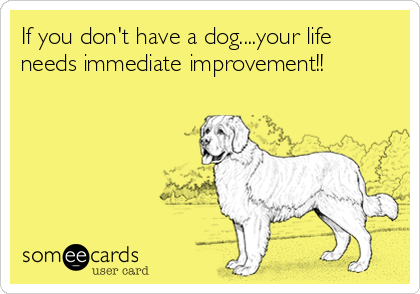 If you don't have a dog....your life needs immediate improvement!!