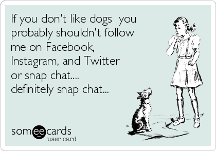 If you don't like dogs  you probably shouldn't follow me on Facebook, Instagram, and Twitter  or snap chat.... definitely snap chat...