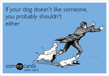If your dog doesn't like someone, you probably shouldn't either