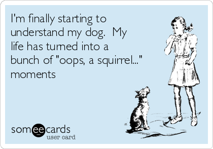 "I'm finally starting to understand my dog.  My life has turned into a bunch of ""oops, a squirrel..."" moments"